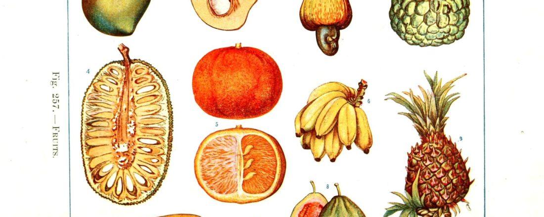 Alimentos que hacen crecer tu estamina sexual- sexologos online